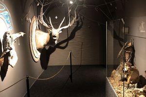Jagdkultur Museum Altenfelden
